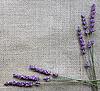 Lavender flowers on sackcloth | Stock Foto