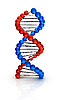 Vector clipart: Dna 3d