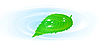 Vector clipart: green leaf over the water