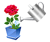 watering can with rose