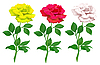 Vector clipart: realistic roses