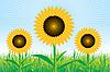 Vector clipart: Beautiful sunflower background
