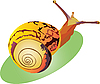 Vector clipart: snail crawling up