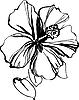 Vector clipart: hibiscus