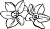 Vector clipart: couple of daffodils