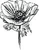 Vector clipart: poppy flower on the stalk