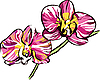Vector clipart: two orchids with yellow center and violet petals