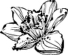 Vector clipart: Narcissus bud