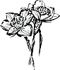 Vector clipart: flowers of narcissus
