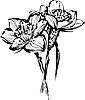 Векторный клипарт: цветы нарцисса