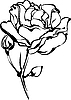 Vector clipart: white roses in bud on white background
