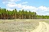 모래도 소나무 목재로 이동   Stock Foto