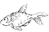 Vector clipart: inhabitant of reservoirs of earth of large fish