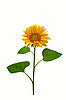Gorgeous sunflower | Stock Foto