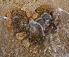 ID 3054460 | 石块沙子的心 | 高分辨率照片 | CLIPARTO