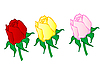 Red, yellow and pink roses   Stock Illustration
