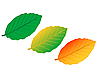 Vector clipart: colour leaves