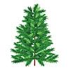 Зеленая ель | Векторный клипарт