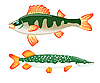 Vector clipart: perch and pike