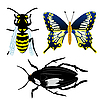 Vector clipart: insects
