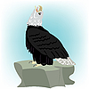 Vector clipart: eagle on stone