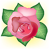 Vector clipart: Red rose