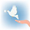 White dove carries letter in beak
