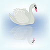 Bird swan and reflection in transparent water | Stock Vector Graphics