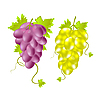 Vector clipart: Two grapes