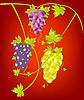 Vector clipart: Grapevine