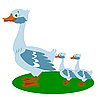 Vector clipart: Goose with small goslings