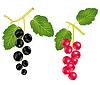 Векторный клипарт: Отделения смородины и дерево sorrels