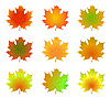 Maple autumn leaves | Stock Vector Graphics