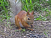ID 3062641   Squirrel on the ground   High resolution stock photo   CLIPARTO