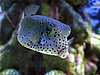 하단의 열대 이국적인 물고기 수중   Stock Foto