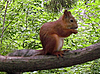 Squirrel on the branch | Stock Foto