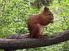 松鼠在树枝上 | 免版税照片