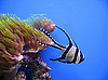 Tropical exotic fish | Stock Foto