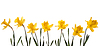 ID 3324388 | Spring narcissus | High resolution stock photo | CLIPARTO