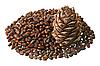 Photo 300 DPI: Cedar nuts and cone
