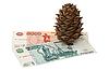 Photo 300 DPI: Cedar cone and money