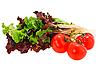Lettuce and tomato   Stock Foto