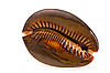 Seashell | Stock Foto