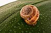 Snail | Stock Foto