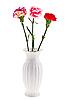 Photo 300 DPI: Carnations