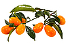 ID 3067506 | Oranges | High resolution stock photo | CLIPARTO