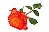 ID 3067845 | Rose | High resolution stock photo | CLIPARTO