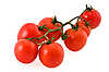 Branch of tomatoes | Stock Foto