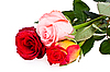 Bouquet of roses | Stock Foto
