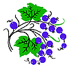 Vector clipart: Bunch of red currant. Ripe berry